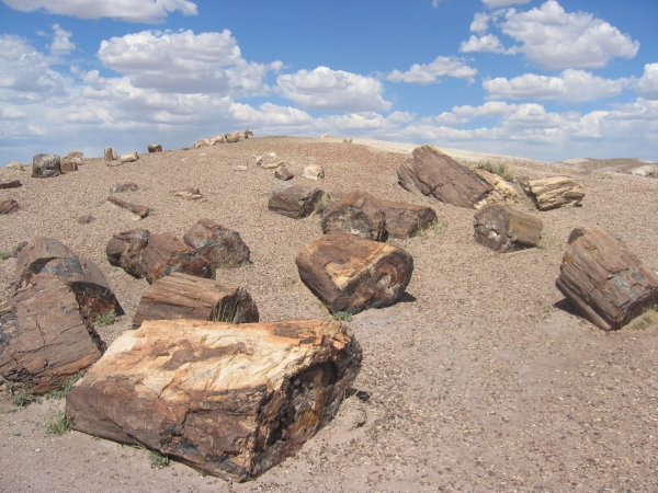 Petrified Forest National Park Wood