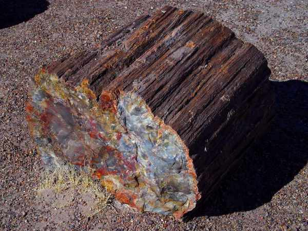Petrified Log, Pet. Forest, AZ