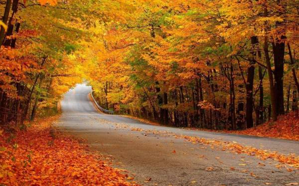 Fall along a lonely road