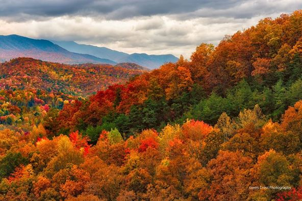 Smoky Mtns. Fall, Foothills Pkway