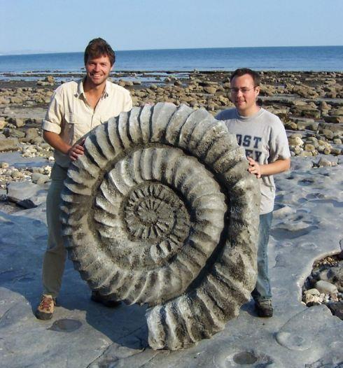 Giant Fossila Ammonite