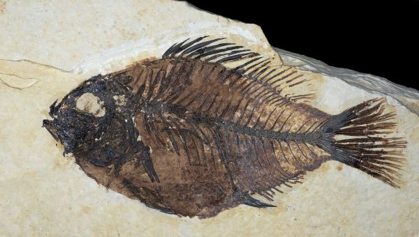 Fossil Fish, Green River, WY