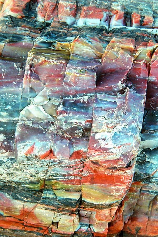 Petrified Wood, Quartz, AZ