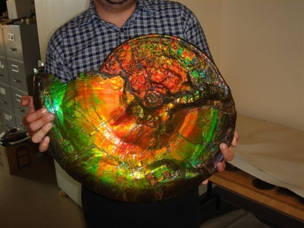 7.  Opalized Ammonite Fossil. by Mihai Andrei .