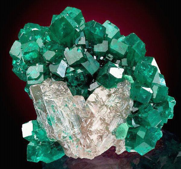 4.  Dioptase Crystals.  by unknown
