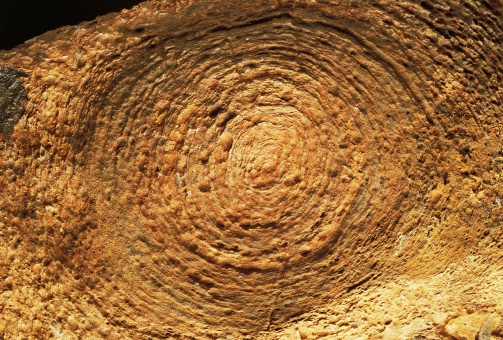 1.  PreCambrian Age Fossils, Stromatolites-Jacutophyton.  by Gettyimages