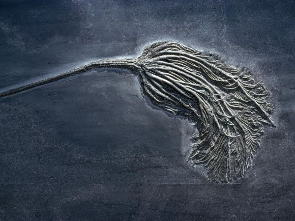 6.  Mississippian Age, Crinoid fossil. www-sciencenationalgeographic-com