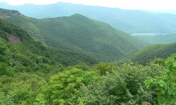 App, Mt. BR Pkwy, Craggy Gardens, Yancey Co., NC. 2006. Ken Thomas