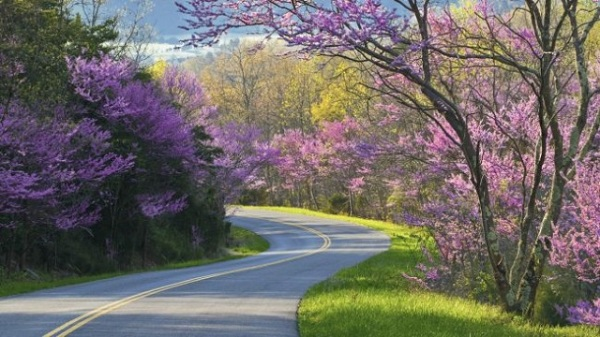 Blue-Ridge-Parkway-North-Carolina-Virginia-USA