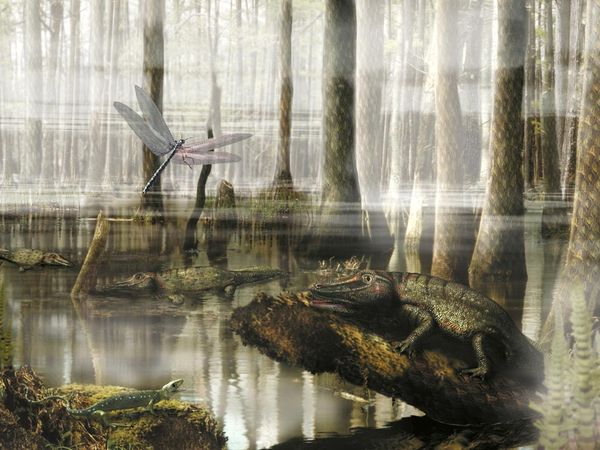 7.  Carboniferus Sswamp. science.nationalgeographic.com