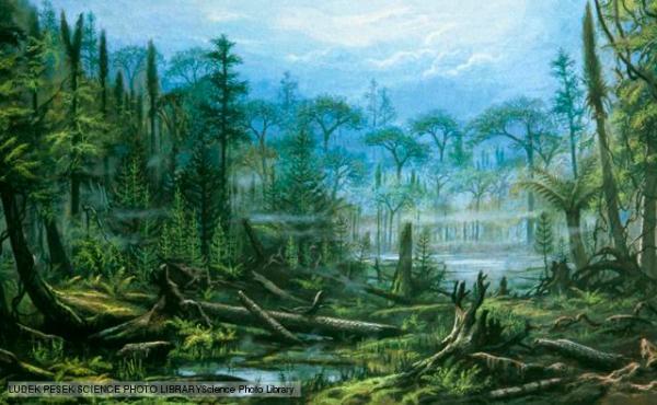 Artist's impression of a Carboniferous forest