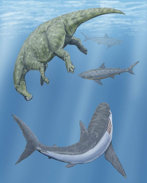 AL.  Squalicorax sharks with Hadrosaur