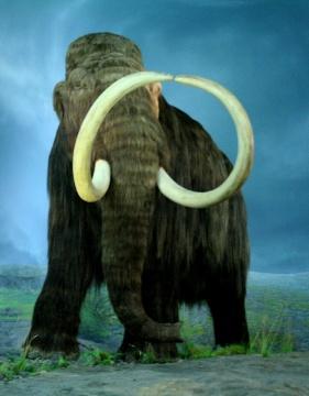 AL.  Wooly Mammoth. Ruffner Mt. Nature Ctr.  birmingham365.org