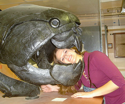 Devonian Arored Fish-2, Dunkleosteus Skull. 03-03-2008. Sam Noble Museum
