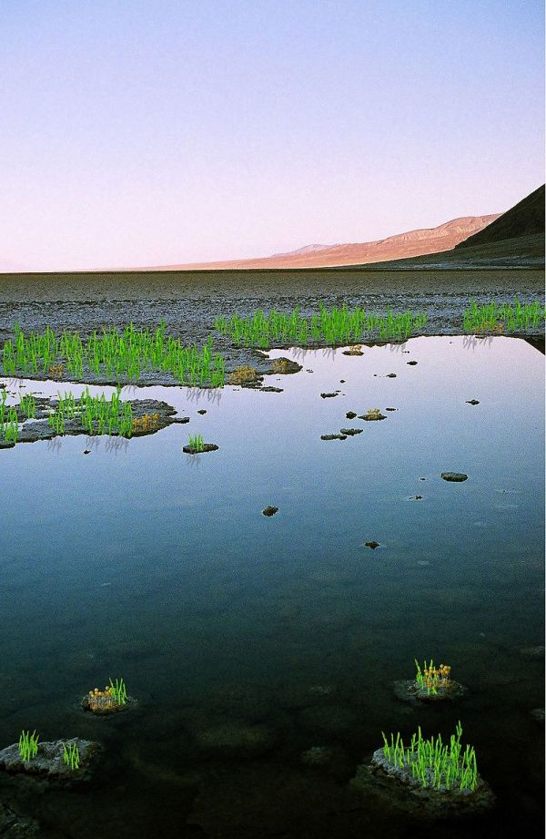 Ordovician. Land Scene. by Jose Bonner