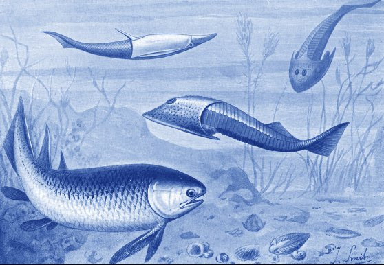 Silurian Fishes. www.fossilmuseum.net
