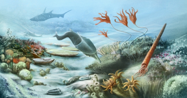 Silurian Sea Life  www.lifesceince.com