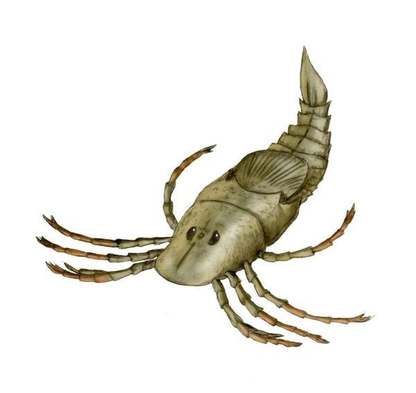 pennsylvania-spider-megarachne-03-12-07-by-nobu-tamura