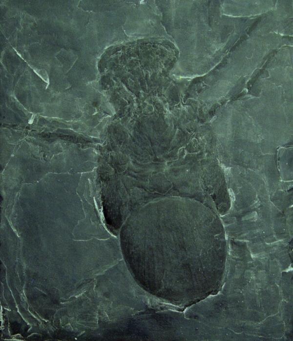 pennsylvania-spider-megarachne-15-12-08-by-hectonichus