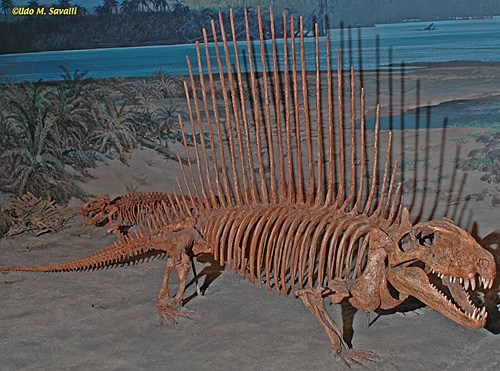 permian-dimetrodon-na-wwwlsavalli-us