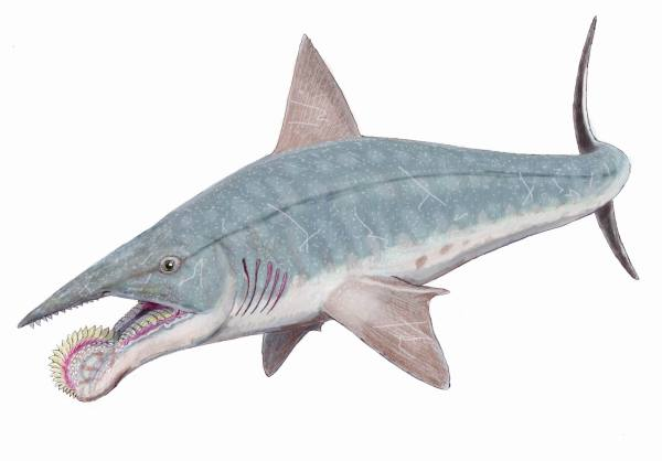 permian-shark-helicoprion-bessonovi1db-whirl-tooth-from-commons-wikimedia-org