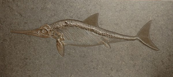 jurassic-ichthyosaur-paleofacts-com