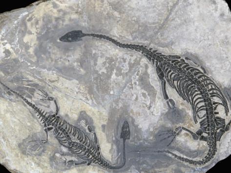 triassic-ken-lucas-mosasaur-fossil-keichousaurus-hui-china-popscreen-com