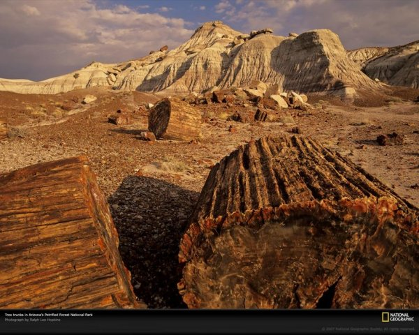 triassic-petrified-forest-by-national-geographic