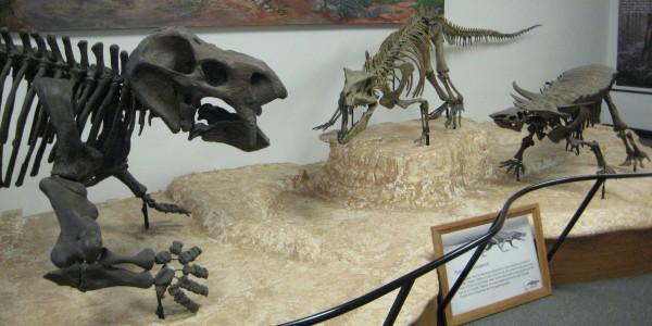 triassic_animals_from_arizona