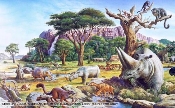 Primitive mammals