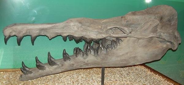 al-basilosaurus_cetoides_skeleton-by-dr-gerry-goeden