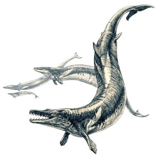 al-state-fossil-basilosaurus