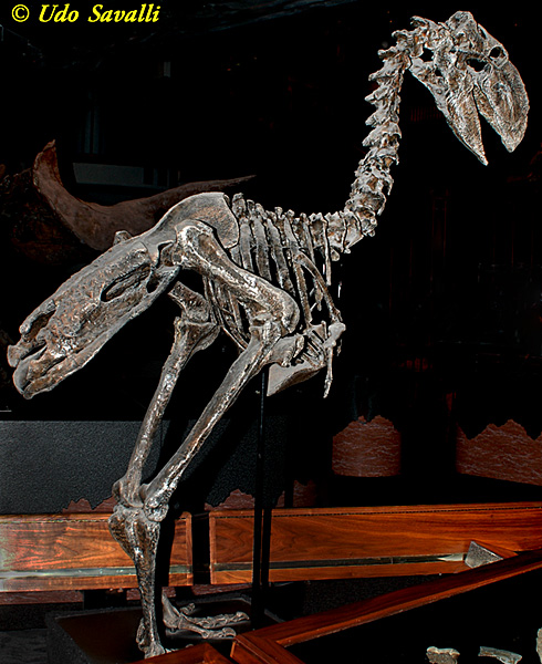 eocene-gastonis-www-saveall-us