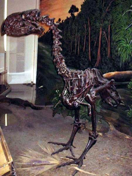 paleocene-gastornis-bird-from-wikipedia