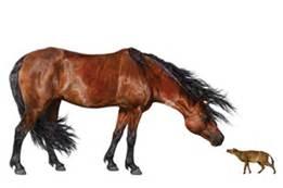paleocene-horse-conservationmagazine-org