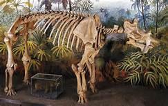 paleocene-terrestrisuchus-geol-umd-edu
