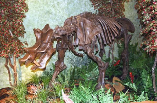 paleocne-uinatatherium-skeleton-pinstopin-com