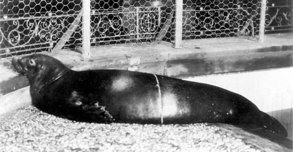 holocene-caribean-monk-seal-d-2008
