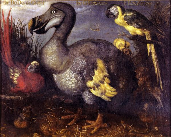 holocene-edwards_dodo-d-1675-by-roelant-savery-1620s-natural-history-museum-london