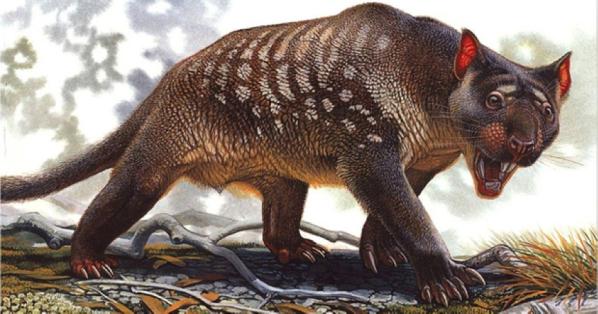 pleistocene-australian-marusupial-lion-thylacolea-blogs-unimelb-edu-au