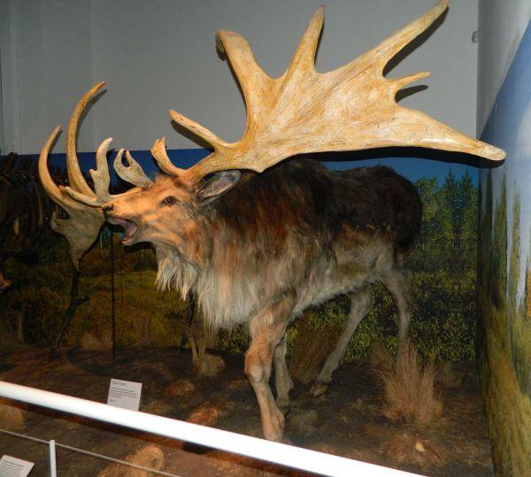 pleistocene-giant-deer-irish-elk-11-23-2013-by-bazonka