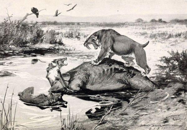 pleistocene-la-brea-tar-pits-ca-smilodon-canis-dirus-mammuthus-columbi-1913-by-robert-bruce-horsefall