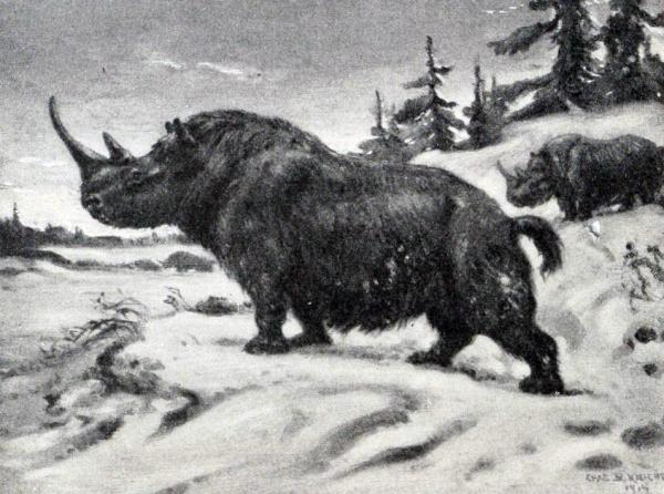 pleistocene-wooly-rhinoceros-1916-by-charles-r-knight