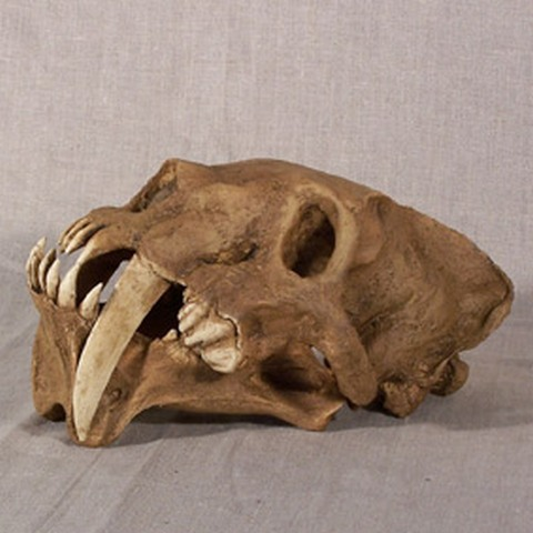 pliocene-barbourofelis-ssabretooth-cat-lovei