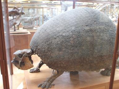 Glyptodon Asper