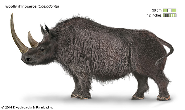pliocene-woolly-rhinoceros-encyclopedia-britannica