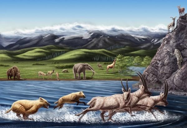 pliocene-zanda-fauna-by-julie-selan